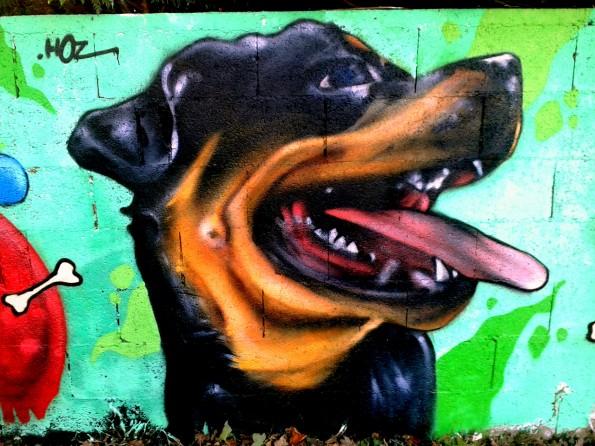 Portrait graffiti de Rottweiller.